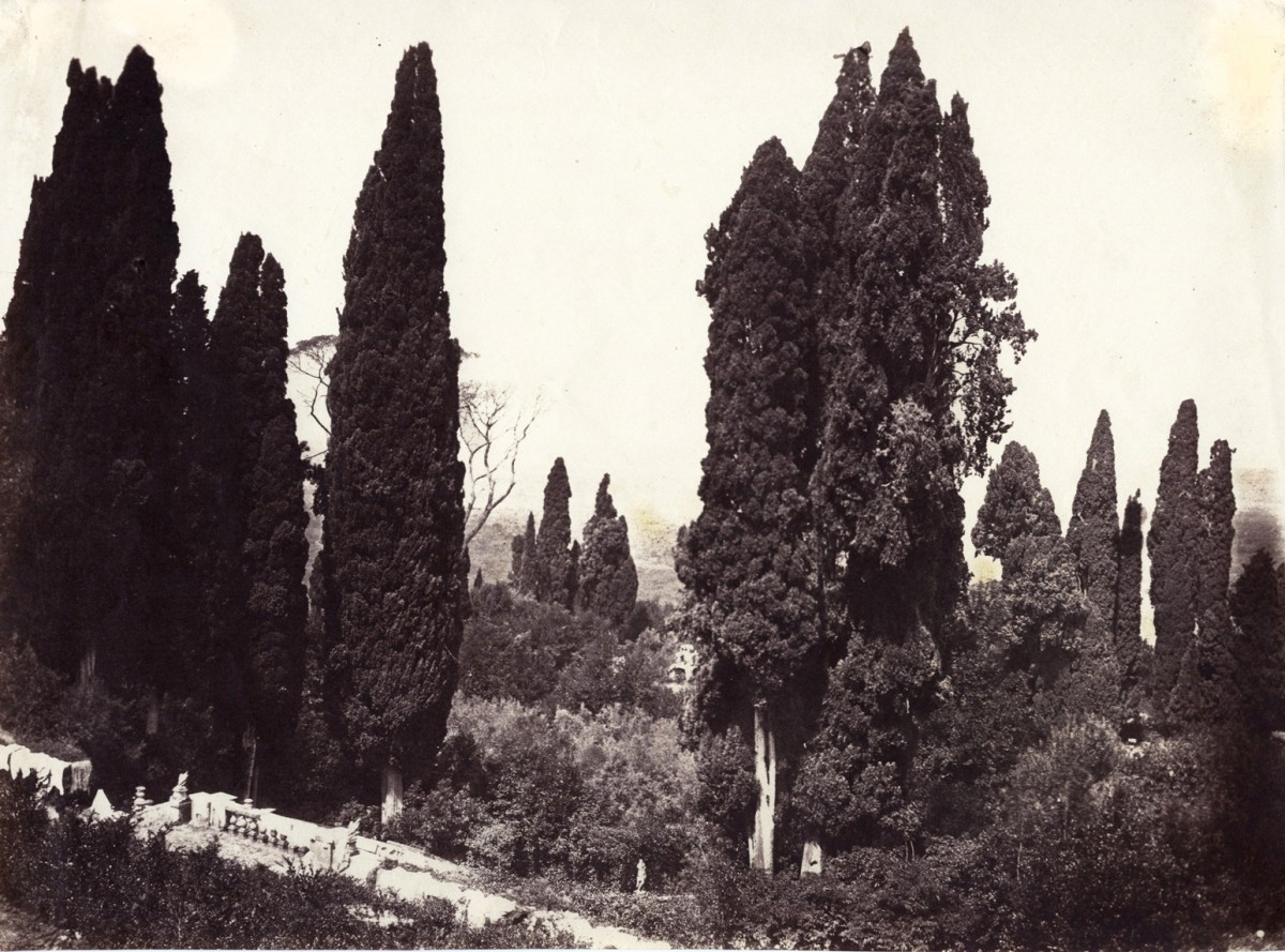 Trees and Garden at the Villa d'Este